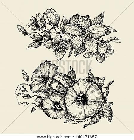 Flower. Hand-drawn sketch bindweed, tutsan, hypericum Vector illustration