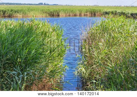 place on the lake for fishing in the green reed