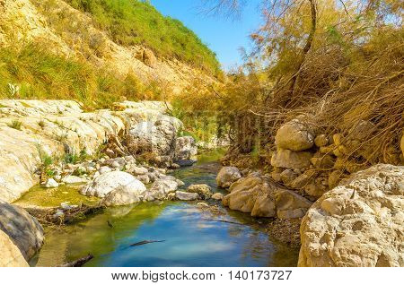 The mirror surface of the mountain river in Ein Gedi Nature Reserve Israel.