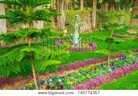 The flower beds with colorful pansies and coniferous trees in Bahai Gardens in Haifa Israel.