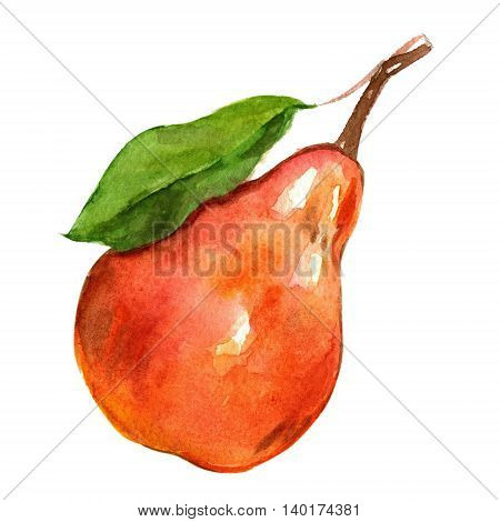 Watercolor hand drawn fruit icon Isolated on white