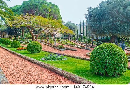 The trimmed balls of bushes geometric flower beds and spreading trees decorate the Bahai Gardens Haifa Israel.