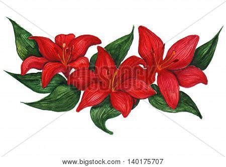 Watercolor three red lilies floral composition isolated