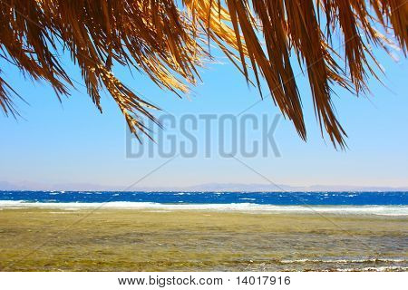 Coastline of Red sea with clear blue sky and dry palm branches