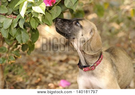 Dog sniffing is a cute dog smelling a small flowered filled tree.
