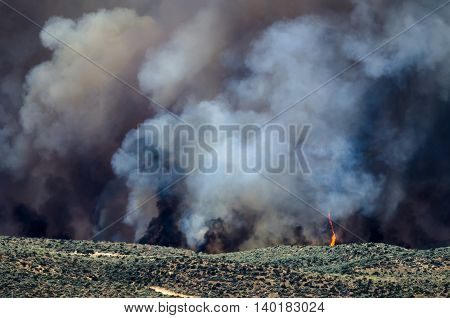 Flames and Dense White Smoke Rising from the Raging Wildfire
