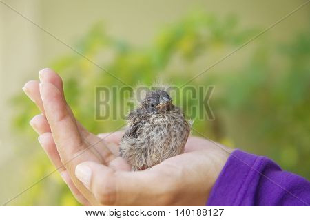 Little Bird Resting in the Girl's Hand.