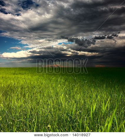Meadow with green grass and rainy clouds