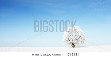 Alone frozen tree in snowy field and clear blue sky