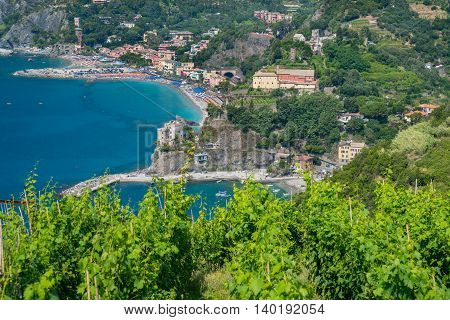 Monterosso along the Cinque Terre Italy with vineyards in the foreground