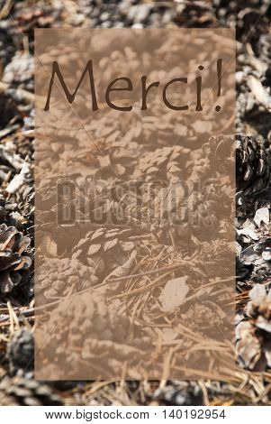 Vertical Texture Of Fir Or Pine Cone. Autumn Season Greeting Card With Copy Space For Free Text. French Text Merci Means Thank You