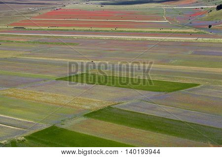 Fields in the Sibellini Mountains in Italy They are red and blue colored by flowers.