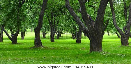 Green grass and apple trees in city park