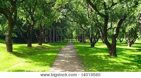 Path in city park with green trees on sides