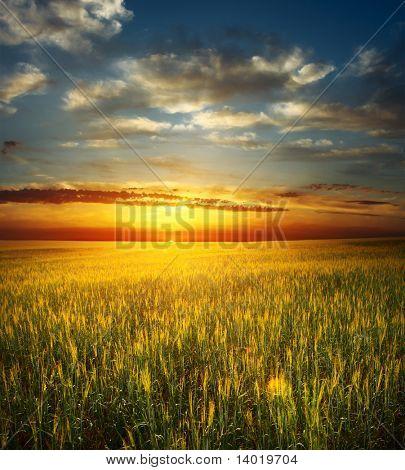 Puesta de sol sobre el campo con trigo
