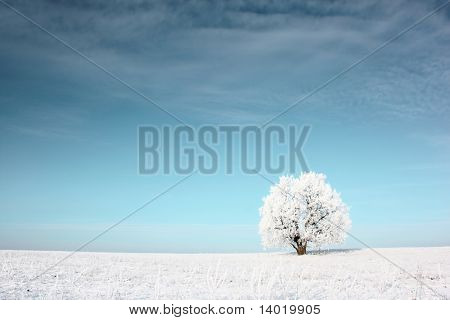 Alone frozen tree in snowy field