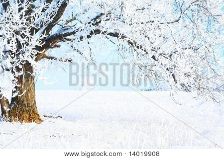 Part of frozen tree and blue sky