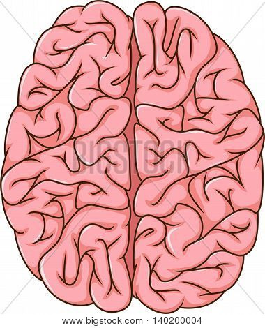 illustration of human left and right brain cartoon