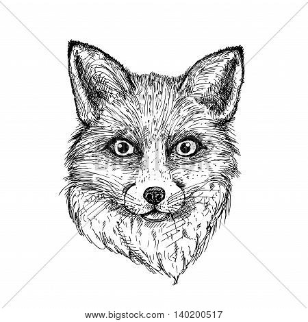 hand drawn ink fox on white background. design for poster, print, t-shirt, invitation, banners, flyers. vector eps 8.