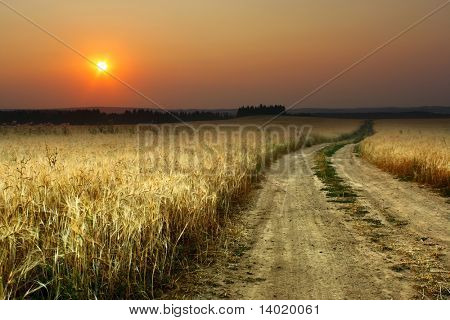 Road in field with ripe yellow wheat