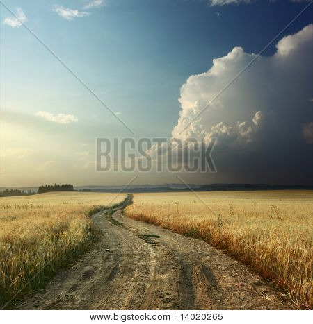 Road in field with ripe wheat and blue sky with clouds