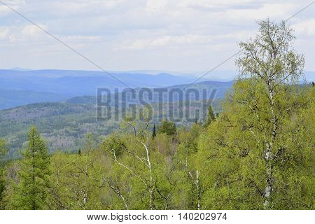 Coniferous mixed forest on a background of blue sky