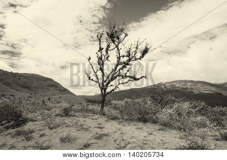 Lonely Tree In The Andes Mountain Range South America Monochrome Shot