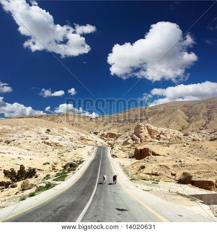 Estrada de asfalto nas montanhas e dois burros andando sobre ele