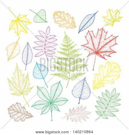 large set of multi-colored leaves of different trees. Hand drawing. Vector illustration