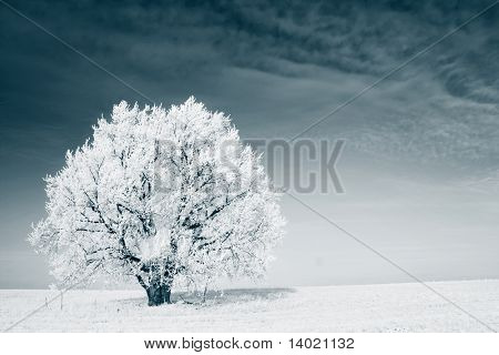Frozen tree on winter field and blue sky