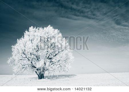 Árbol congelada en invierno campo y cielo azul
