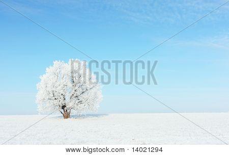 Alone frozen tree on snowy field and clear blue sky