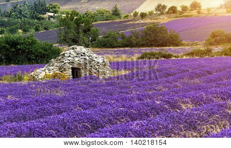 Beautiful landscape of blooming lavender field in Provence, France, Europe. Old stone farm house in middle of field.