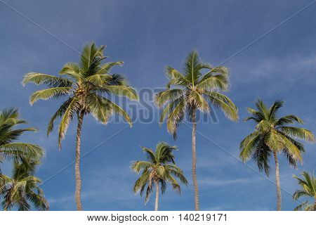 palms with sky at background tropical landscape