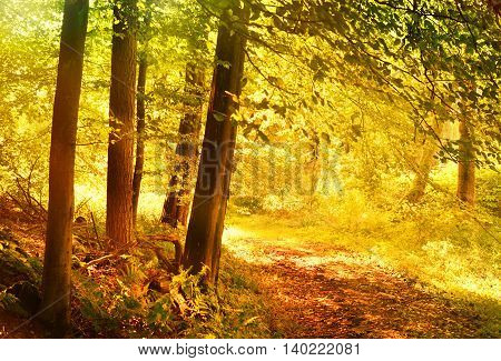 Autumn forest with vibrant color. Autumn scene with footpath in the woods with copy space.