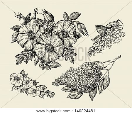 Flowers. Hand-drawn sketch flower, lilac, dogrose, rosehip wild rose Vector illustration