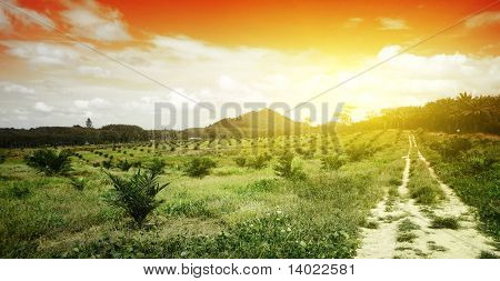 Rural road in through valley and red sky with clouds