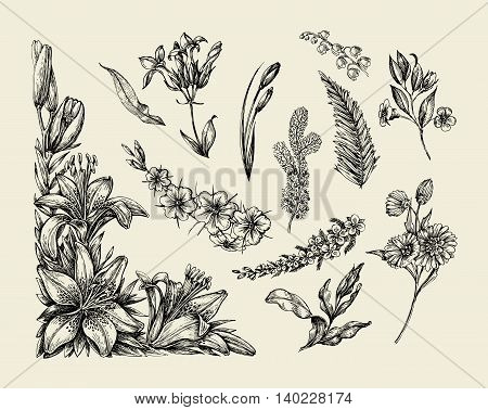 Flowers. Hand-drawn sketch flower, lily, fern, grass, herb bracken lilia Vector illustration