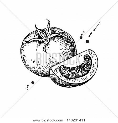 Tomato vector drawing. Isolated tomato and sliced piece. Vegetable engraved style illustration. Detailed vegetarian food sketch. Farm market product.