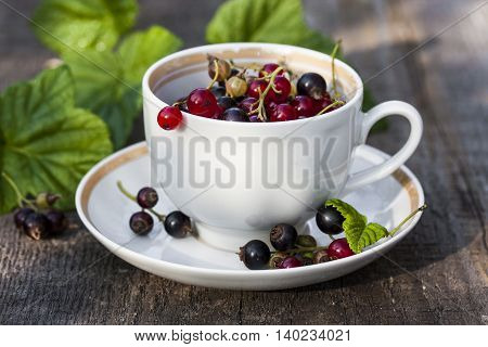 fresh currants in the garden: black currant red currant and white currant
