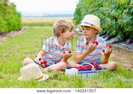 Two little friends, kid boys having fun on raspberry farm in summer. Children eating healthy organic food, fresh berries. Happy twins.
