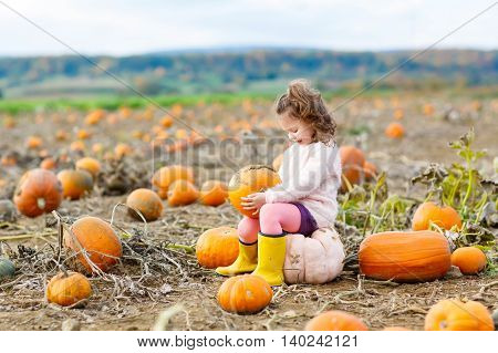 Beautiful little kid girl having fun with farming on a pumpkin patch. Traditional family festival with children, thanksgiving and halloween concept. Cute farmer with big vegetables.