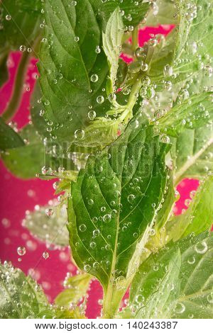 Fresh mint surrounded by water bubbles with copy space on the red background