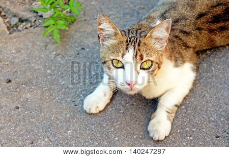 Cat is lying on the asphalt in the summer