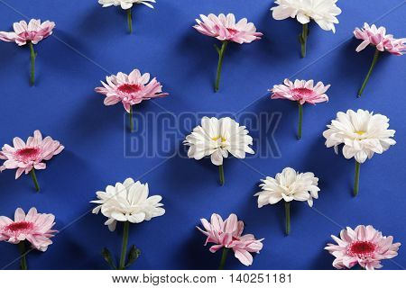 Beautiful flowers on blue background