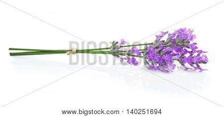 Lavender flowers on light background