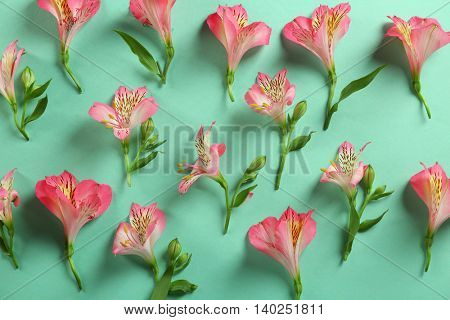 Beautiful flowers on turquoise background