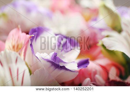 Beautiful eustoma flowers, close up