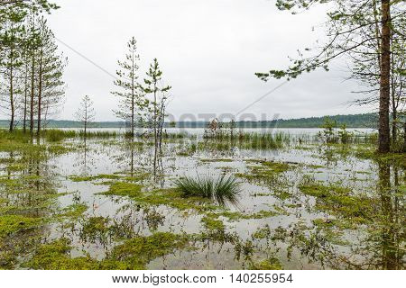 Beautiful Scenery Wetland Lakes In The Natural Park Vepsian Forest.