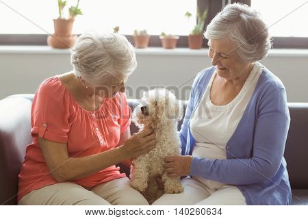 Senior women stroking a dog in a retirement home